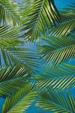 Tropical palm foliage, greenery background, summer concept.  royalty free stock photos