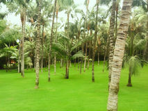 Tropical palm forest. With green grass royalty free stock photos