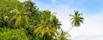 Free Tropical Palm Forest On The River Bank. Wide Photo. Stock Images - 111232134