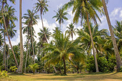 Tropical palm forest Royalty Free Stock Image