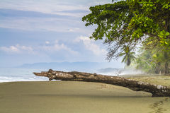 Tropical palm fringed beach with angled log in foreground Stock Images