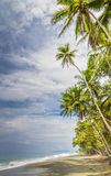 Tropical palm fringed beach Royalty Free Stock Photos