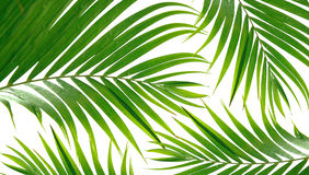 Tropical palm fronds royalty free stock photography