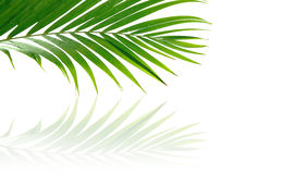 Tropical palm fronds Royalty Free Stock Photos