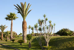Tropical palm garden Royalty Free Stock Photos