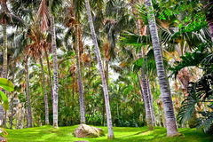Tropical palm garden in beautiful paradise. Tenerife Royalty Free Stock Images