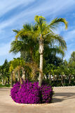 Tropical Palm Garden with Flowers Stock Photo