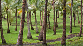 A tropical palm grove. Vacation island Stock Photography