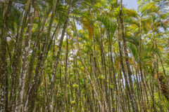 Tropical palm grove Stock Photography