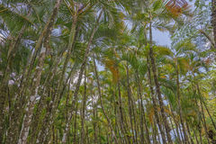 Tropical palm grove Stock Image