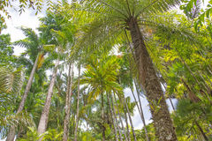 Tropical palm grove Royalty Free Stock Photos