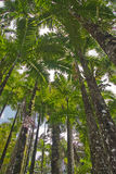 Tropical palm grove Royalty Free Stock Photo
