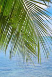 Tropical palm leaf against a tranquil sea Royalty Free Stock Image