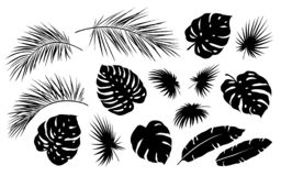 Tropical palm leaf and branch black set royalty free stock photo