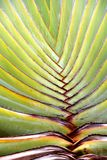 Tropical palm leaf in closeup structure Royalty Free Stock Photos