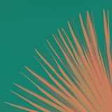 Tropical palm leaf with colorful background, toned pink turquoise trendy color stock photography