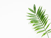 Tropical palm leaf. Flat lay, top view. Royalty Free Stock Photos