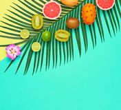 Tropical Palm Leaf, Fruits.Bright Summer Set.Vegan. Tropical Vegan Colorful Flat lay. Summer Design Set. Palm Leaf and Fresh Fruits. Trendy Fashion concept stock photo