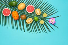 Tropical Palm Leaf, Fruits.Bright Summer Set.Vegan. Tropical Summer Design Set. Palm Leaf and Fresh Fruits. Trendy Fashion concept. Vegan Colorful Flat lay stock photo