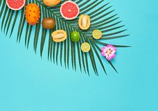 Tropical Palm Leaf, Fruits.Bright Summer Set.Vegan. Tropical Summer Design Set. Palm Leaf and Fresh Fruits. Trendy Fashion concept. Vegan Colorful Flat lay stock images
