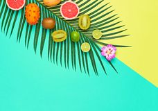 Tropical Palm Leaf, Fruits. Summer Vegan Set. Tropical Summer Design Set. Palm Leaf and Fresh Fruits. Trendy Fashion concept. Vegan Colorful Flat lay. Creative royalty free stock images