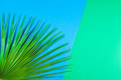 Tropical palm leaf on pastel blue and green background. Tropical palm leaf on pastel blue and green background stock photography