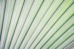 Tropical palm leaf pattern Stock Photo