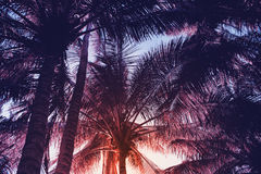 Tropical palm leaf on red sunset sky background. Tropical nature moody style toned photo. Stock Photos