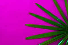 Tropical palm leave on pink background. royalty free stock photos