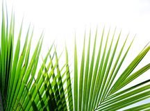 Tropical palm leaves Stock Images