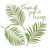 Tropical palm leaves. Areca branch. Vector isolated. Tropical palm leaves. Realistic Green Areca. Vector isolated on white background royalty free illustration