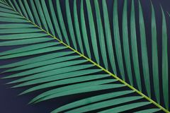 Tropical palm leaves on black color royalty free stock image