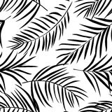 Tropical palm leaves black and white Stock Images