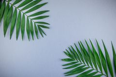 Tropical palm leaves on blue grey paper background. Creative flat lay top view of green tropical palm leaves on blue grey paper background with copy space royalty free stock photo