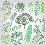 Tropical palm leaves,branches set.Outline,Green. Tropical palm leaves set.Vector leaf,outline drawing in vintage style. on white.Monstera leaves.Tree branches Stock Photos