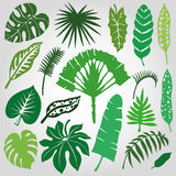 Tropical palm leaves,branches set.Silhouette,Green Royalty Free Stock Photo