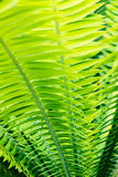 Tropical palm leaves close up Stock Photos