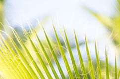 Tropical palm leaves. Close-up view of fresh green palm tree leaf Royalty Free Stock Images