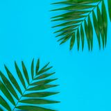 Tropical palm leaves on color paper background. Creative flat lay top view of green tropical palm leaves on color paper background with copy space. Minimal stock photos