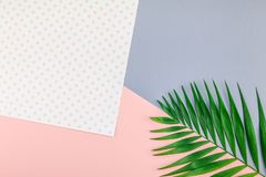 Tropical palm leaves on color paper background. Creative flat lay top view of green tropical palm leaves on color paper background with copy space. Minimal royalty free stock image