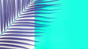 Tropical palm leaves on colorful royalty free stock photography
