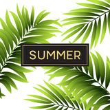 Tropical palm leaves design for text card. Vector illustration Royalty Free Stock Image