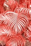 Tropical palm leaves, floral pattern background with color of the year. stock image
