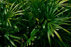 Tropical palm leaves,Green floral pattern background royalty free stock photo