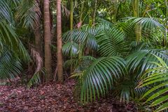 Tropical palm leaves, green rainforest background Stock Photography