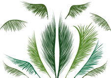 Tropical palm leaves Royalty Free Stock Photography