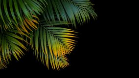 Tropical palm leaves, green and yellow palm fronds on black back. Ground Royalty Free Stock Photo