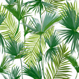 Tropical Palm Leaves, Jungle Leaves Seamless Floral Pattern Background Stock Photography