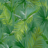 Tropical Palm Leaves, Jungle Leaves Seamless Floral Pattern Background Royalty Free Stock Photography