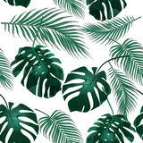 Tropical palm leaves. Jungle thickets. Seamless floral background. Isolated on white. illustration Stock Images